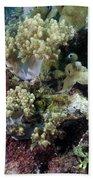Colorful Coral Reef Bath Towel