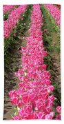Colorful Rows Of Tulips Bath Towel