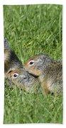 Columbian Ground Squirrels Bath Towel