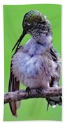 Combing His Feathers - Ruby-throated Hummingbird Bath Towel