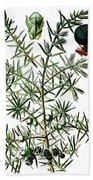 common juniper, Juniperus communis Bath Towel