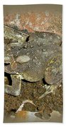 Common Toad - Bufo Americanus Bath Towel