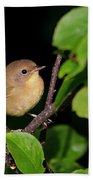 Common Yellowthroat Warbler Bath Towel