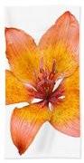 Coral Colored Lily Isolated On White Bath Towel