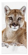 Cougar On White Bath Towel
