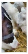 Cow And Lambs Hand Towel