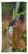 Cowbird Feasting On Milo And Shiloh Military Park In Tennessee Bath Towel