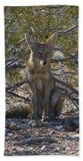 Coyote 3 Bath Towel