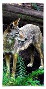 Coyote In Mid Stream Bath Towel