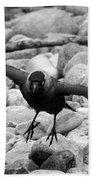 Crow Takes Off Bath Towel