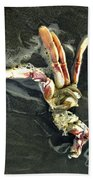 Crustacean On The Shore Bath Towel