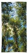 Crystal Lake Il Pine Grove And Sky Hand Towel