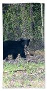 Curious Black Bear  Bath Towel