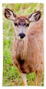 Curious Mule Deer Frolicking On A Colorado Spring Afternoon Bath Towel