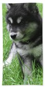 Cute Alusky Puppy Dog Sitting In Green Grass Bath Towel