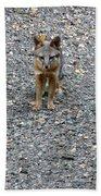 D-a0051-dc Gray Fox Pup Bath Towel