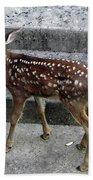 D-a0069 Mule Deer Fawn On Our Property On Sonoma Mountain Bath Towel