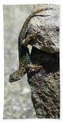 D7b6335 Western Fence Lizard, Male, Sonoma Mountain, Ca Bath Towel