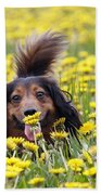 Dachshund On A Meadow In Bloom Bath Towel
