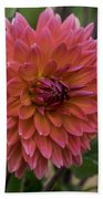 Dahlia In Bloom 19 Bath Towel