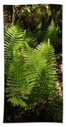 Dancing Ferns Bath Towel