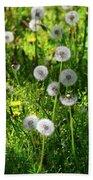 Dandelions On The Maryland Appalachian Trail Bath Towel