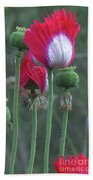 Danish Flag Papaver Somniferum Opium Poppies - Flowers And Pods Bath Towel