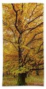 Deciduous Forest In The Autumn Bath Towel