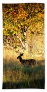 Deer Family In Sycamore Park Bath Towel