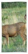 Deer In Boulder Colorado Bath Towel