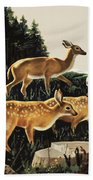 Deer In Forest Clearing Bath Towel