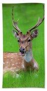 Deer Ruminating Bath Towel