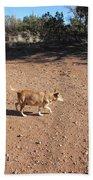Desert Dog Bath Towel