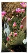 Desert Plants - Fuchsia Cactus Flowers Hand Towel