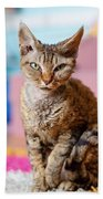 Devon Rex Purebred Domestic Cat Bath Towel