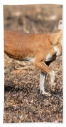 Dhole In The Wild Hand Towel