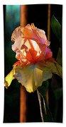 Digital Painting Iris Catching The Sun 6768 Dp_2 Bath Towel
