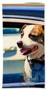 Dog In Car Bath Towel