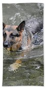 Dog Swimming In Cold Water Hand Towel