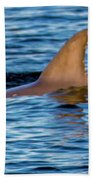 Dolphin Sighting Bath Towel