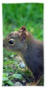 Douglas Squirrel  Bath Towel