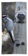Downy Woodpecker Bath Towel