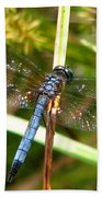 Dragonfly 6 Hand Towel