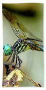 Dragonfly Landing Hand Towel