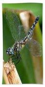 Dragonfly One Bath Towel