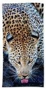 Drinking Leopard Hand Towel