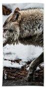 Drinking Wolf Bath Towel