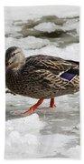 Duck Walking On Thin Ice Bath Towel