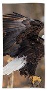 Eagle Landing On Perch Bath Towel