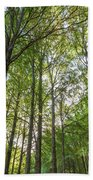 Early Morning In The Forest Bath Towel